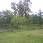 El Tropezón (4)